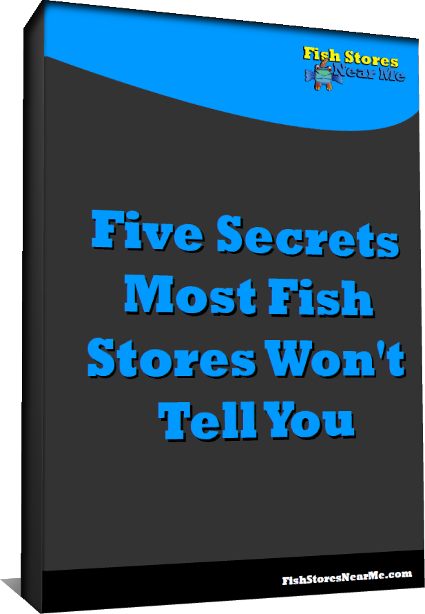 Fish store secrets fish stores near me for Where to fish near me