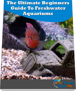 Beginners Guide to Freshwater Aquariums