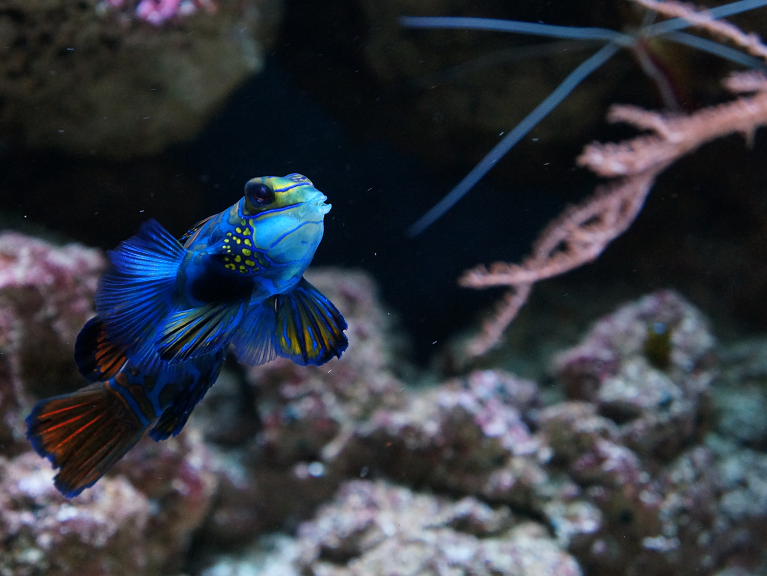 Fish stores near me find local fish and aquarium stores for Fish stores around me