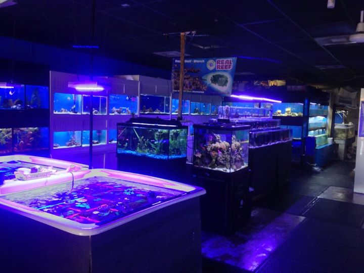 Exotic aquatic fort lauderdale fl for Exotic fish store near me