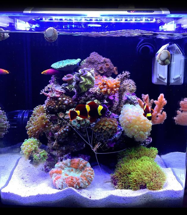 Local fish and aquarium stores in fl for Fish store miami