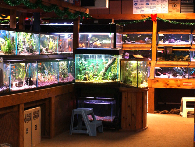 Local fish and aquarium stores in for Fishing gear stores near me