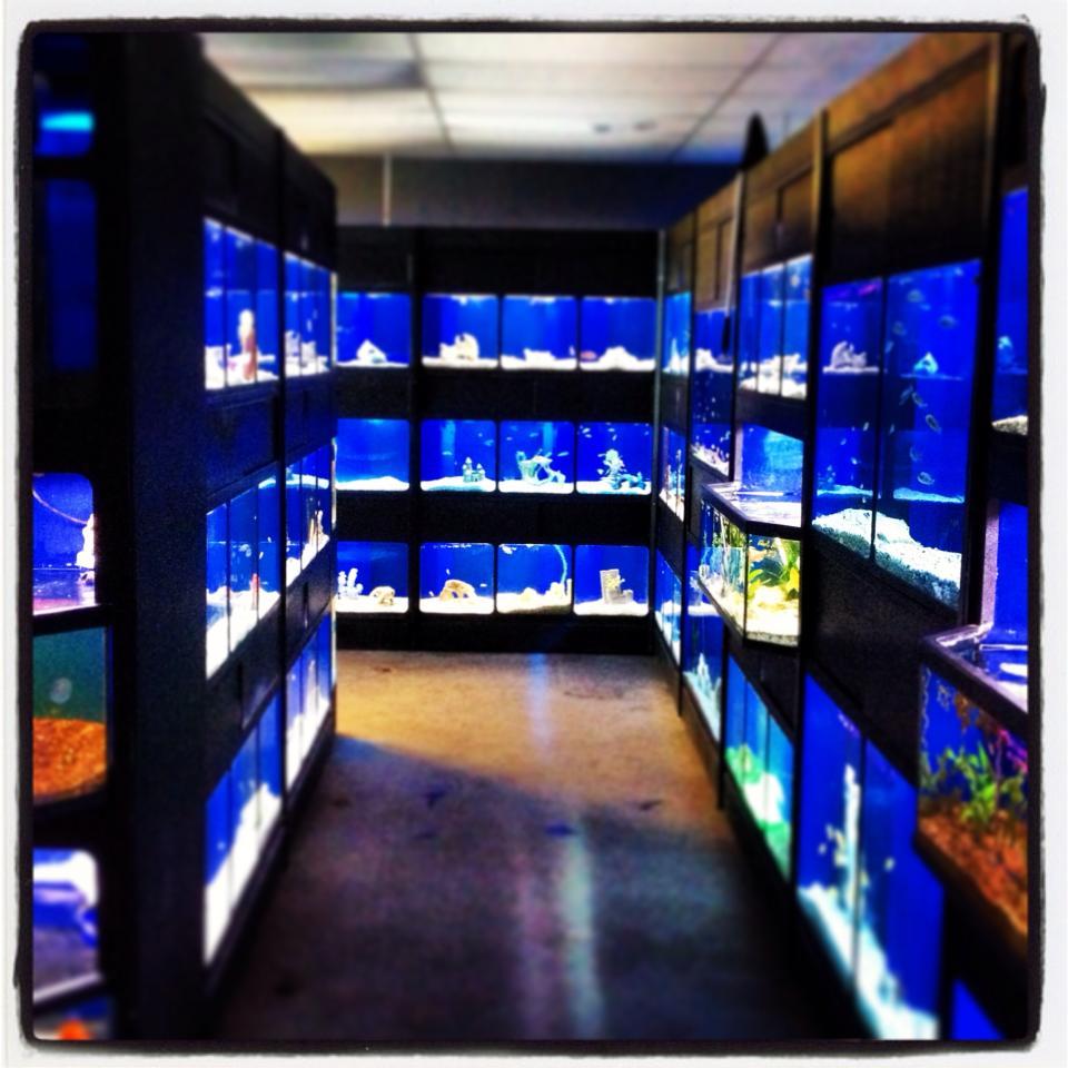 Exotic aquatics more oklahoma city ok for Exotic fish stores near me