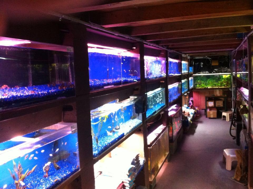 Local fish and aquarium stores in la for Fish and pet store
