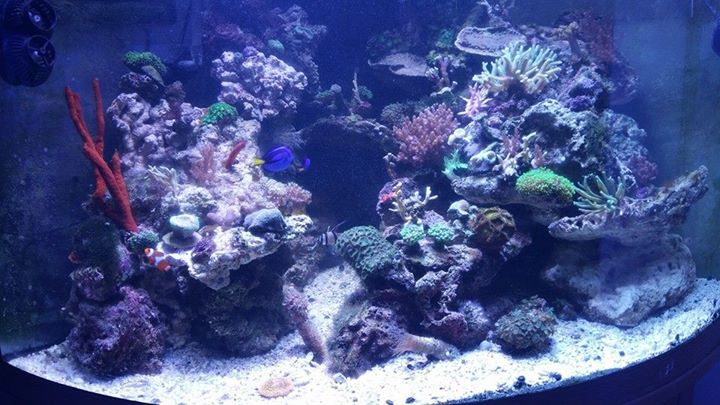 The green aquarium coos bay or for Fish aquarium near me