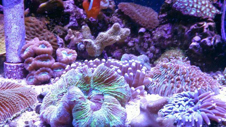 Pet station jackson jackson mi for Pet fish near me