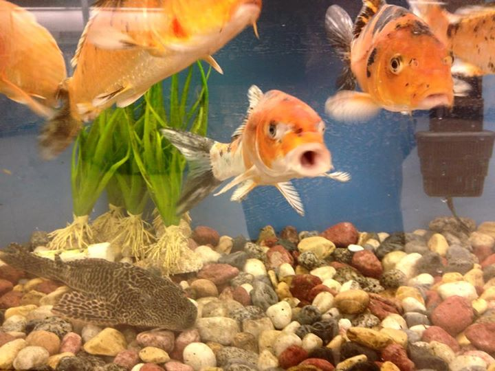 J k 39 s mega pet wabash in for Pet stores with fish near me