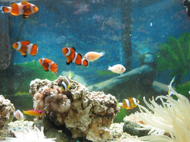 Local fish and aquarium stores in for Live fish store