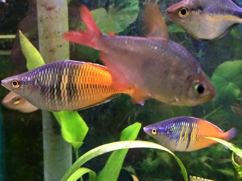 Local fish and aquarium stores in va for Freshwater fish store near me