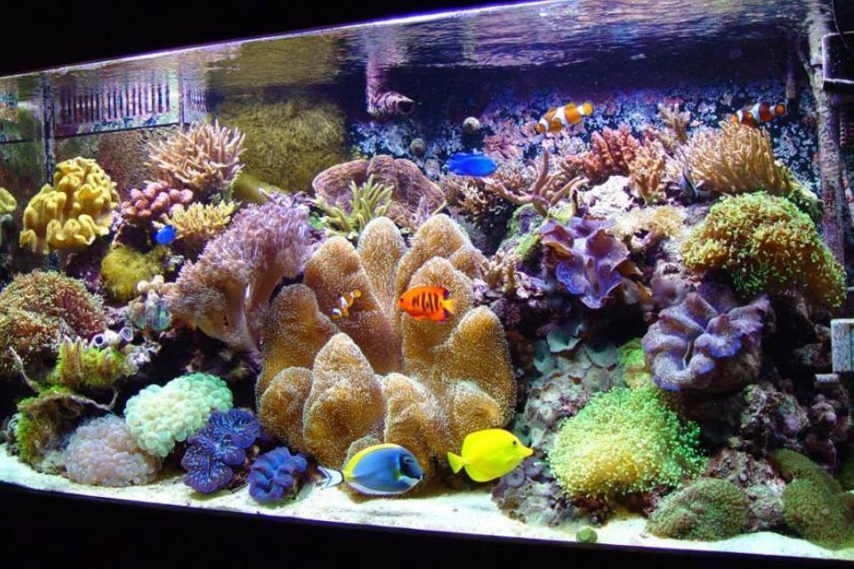 Salty Fish Aquariums - San Antonio, TX | FishStoresNearMe.com