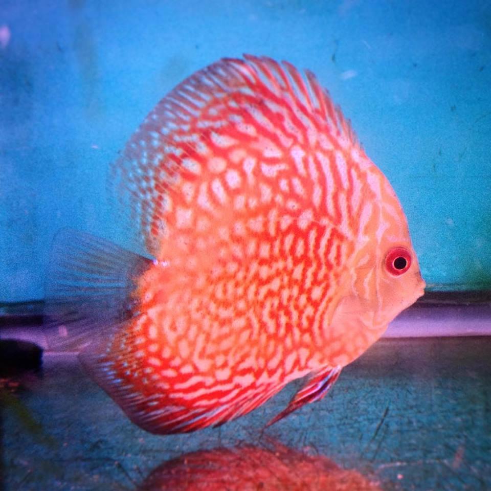Local Fish and Aquarium Stores in   FishStoresNearMe.com