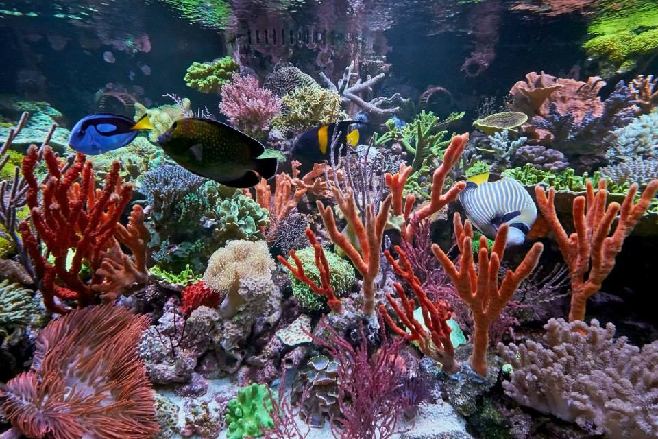 Vivid aquariums canoga park ca for Aquarium fish store near me