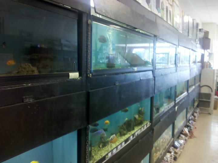 Local fish and aquarium stores in az for Fish aquarium stores near me