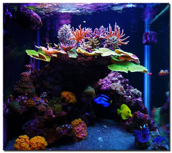 Oasis tropical fish tucson az for Exotic fish store near me