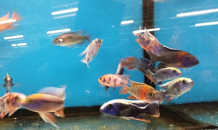 The pet zone pittston pa for Pet stores with fish near me