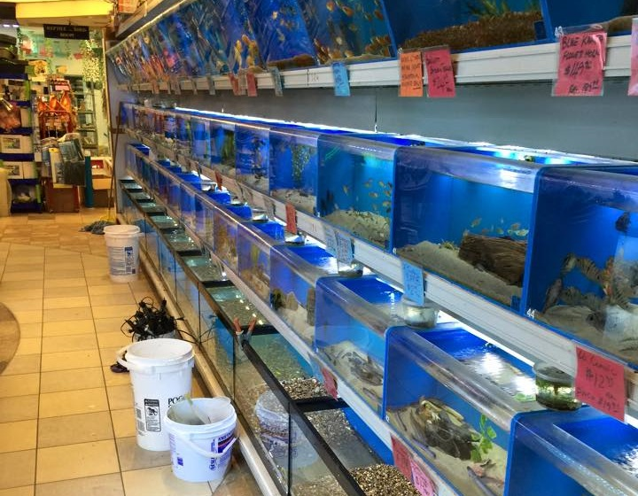 Fish n pets unlimited houston tx for Fish stores around me