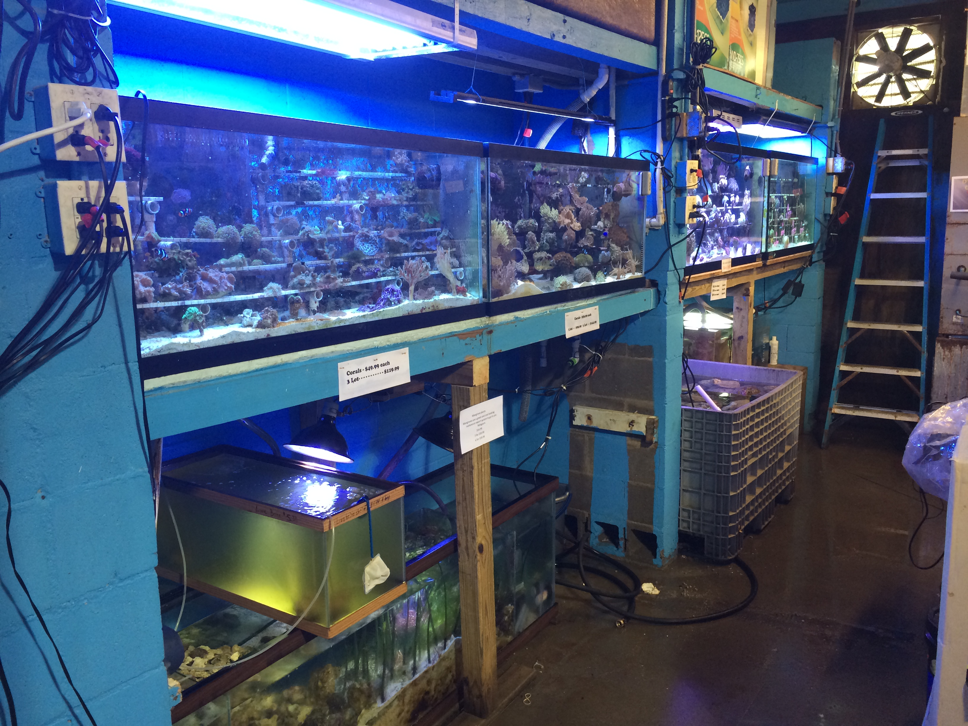 Local fish and aquarium stores in oh for Salt water fish store