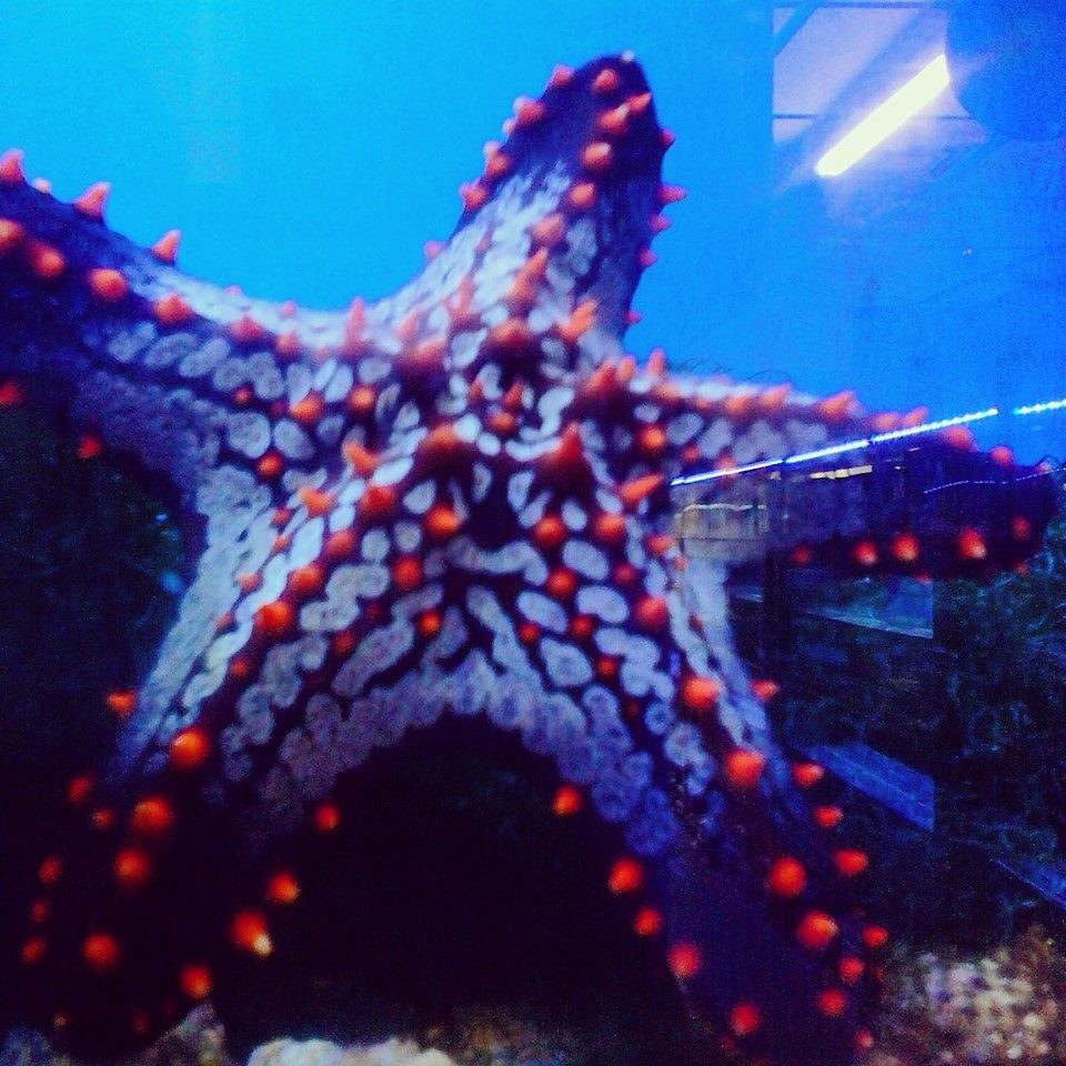 Freshwater fish store near me - Brief Description Tri State Aquariums Is A Family Owned And Operated Full Service Aquarium Center We Specia View More Information