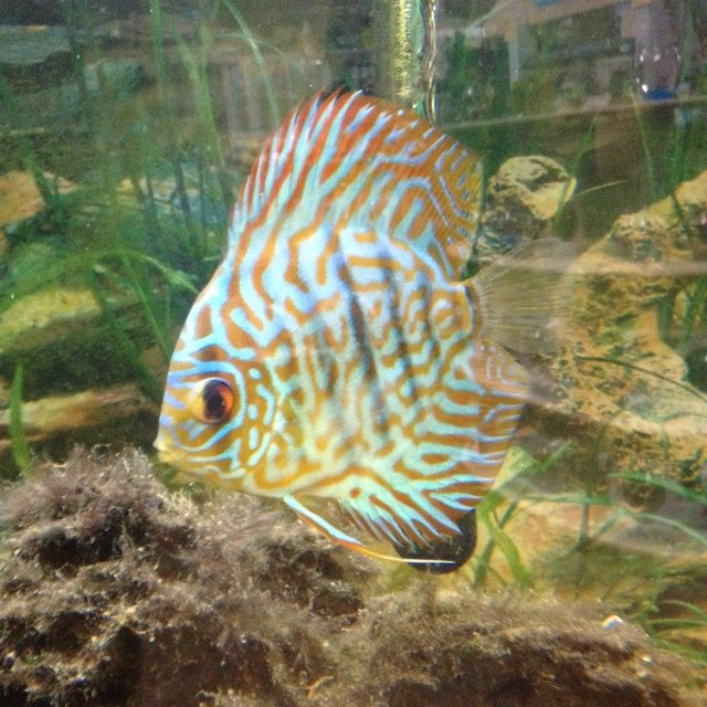Wildside pets mesa az for Pet fish near me