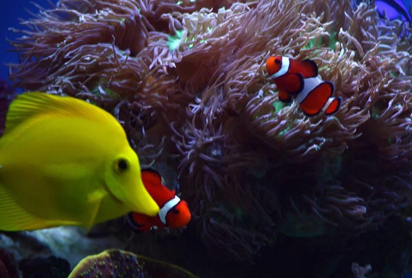 Nemo 39 s reef matthews nc for 1 fish 2 fish store