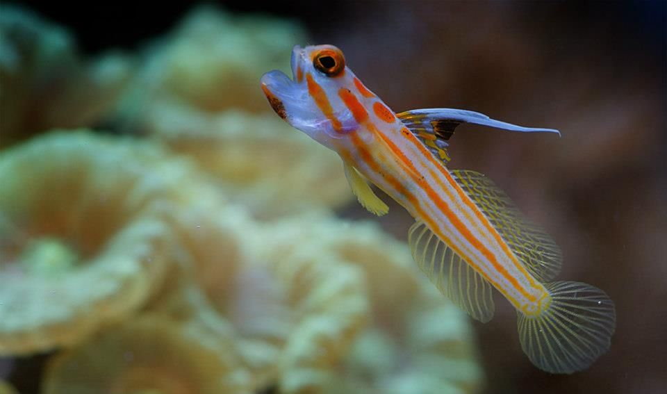 T t fish and reef houston tx for Saltwater fish stores near me