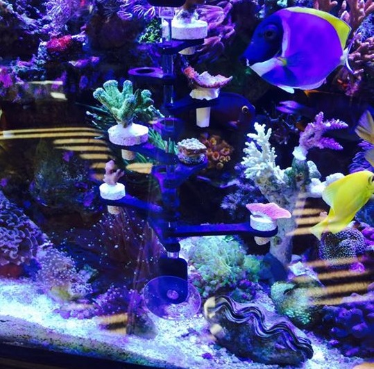 Aquarium near me nc for Aquariums for sale near me