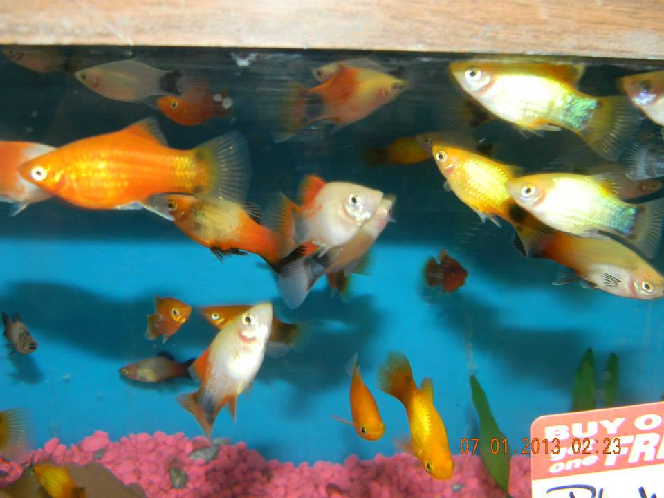 Local fish and aquarium stores in wv for Tropical fish near me