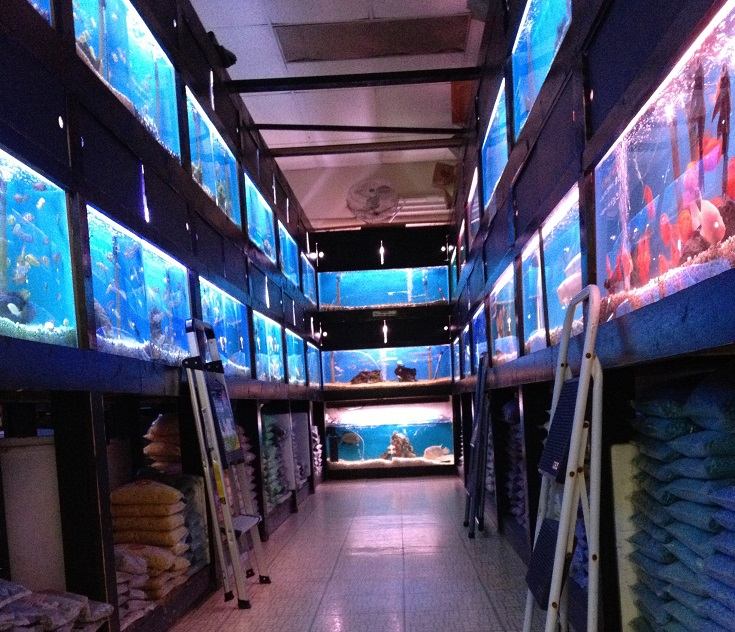 Freshwater aquarium fish store near me 2017 fish tank for Tropical fish shop