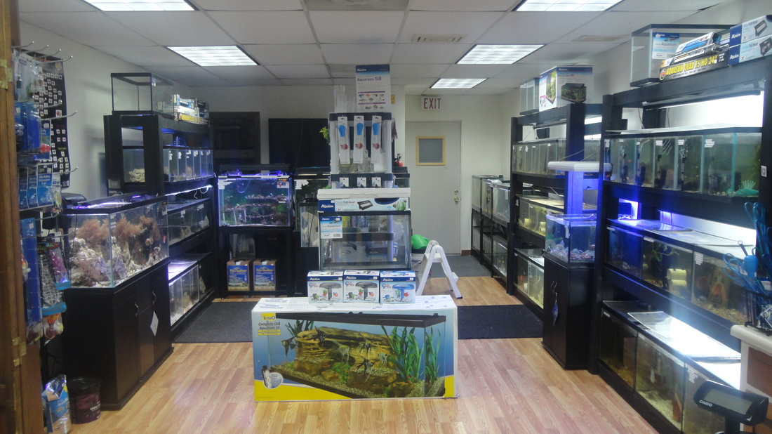 Local fish and aquarium stores in for Fish stores around me