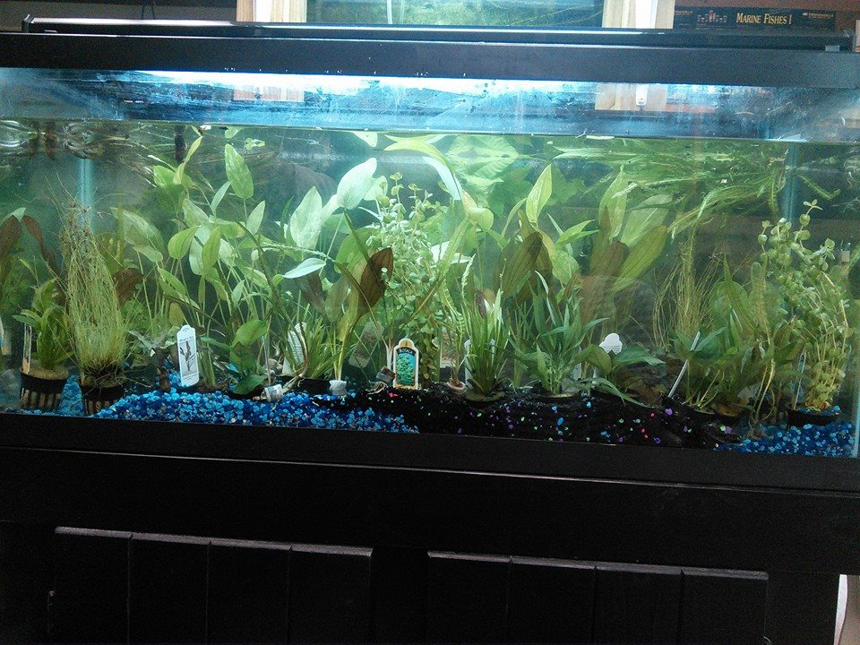 Local fish and aquarium stores in ri for Pet stores with fish near me