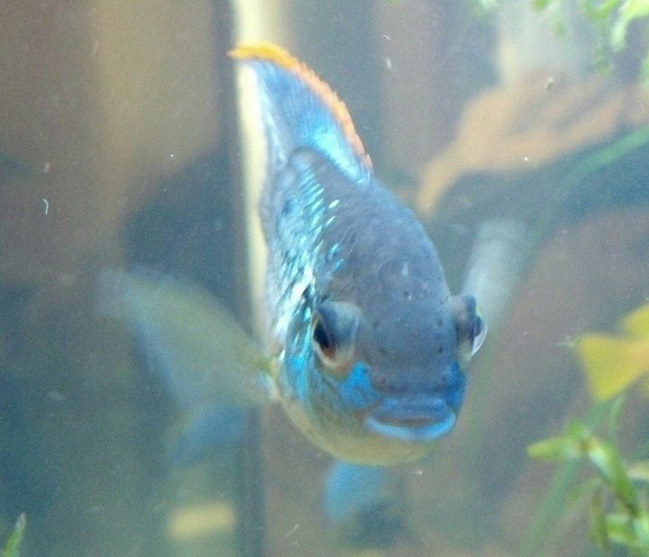 Local fish and aquarium stores in ga for Fish aquarium stores near me