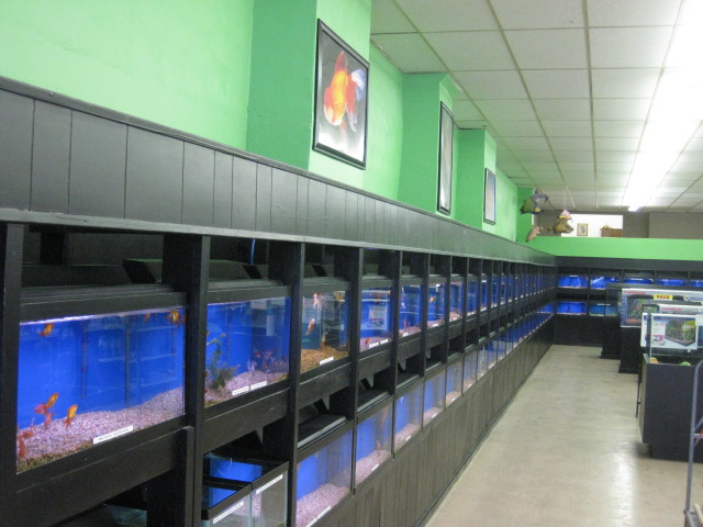 Local fish and aquarium stores in sd for Fish stores around me