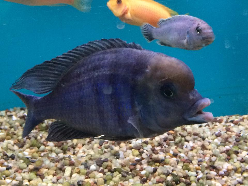 Local fish and aquarium stores in in for Exotic fish store near me