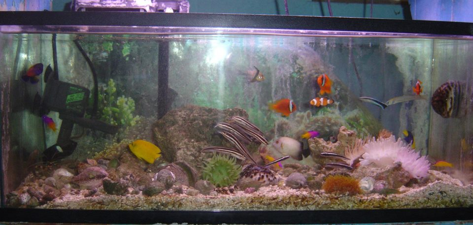 Local fish and aquarium stores in ks for Exotic fish store near me