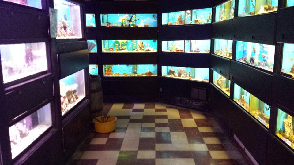 Clark 39 s pet emporium lomas blvd ne albuquerque nm for Fish aquarium stores near me