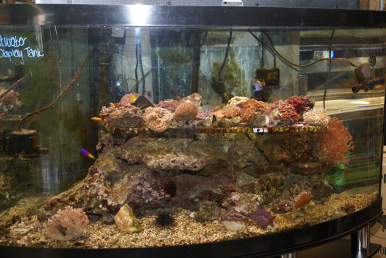 Local fish and aquarium stores in md for Pet store near me fish