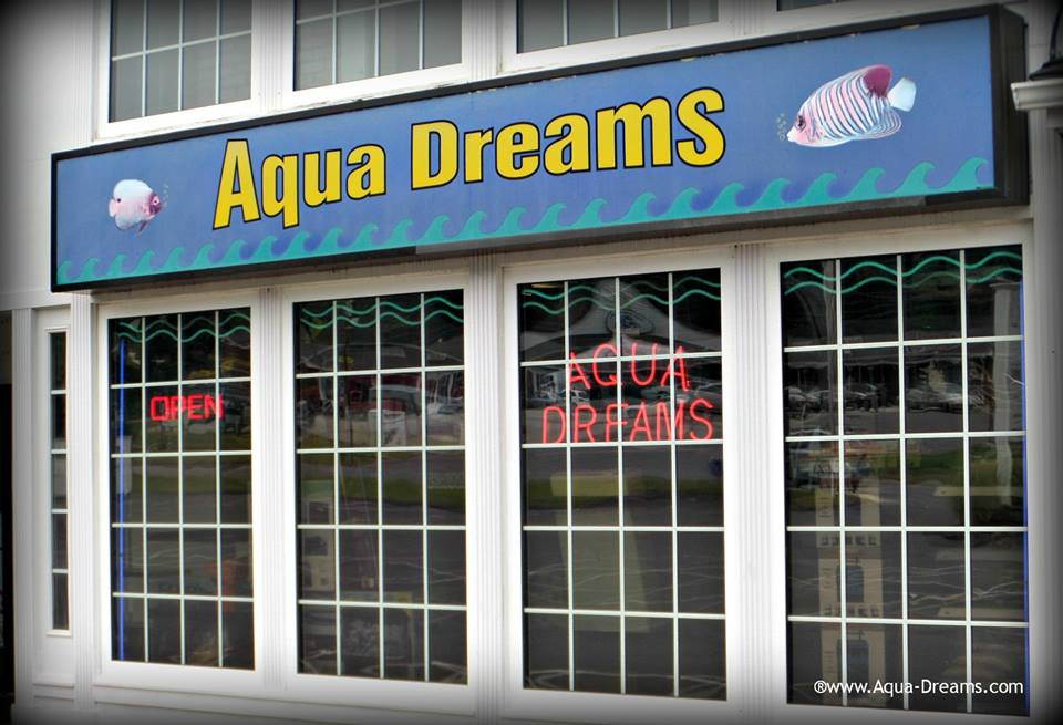 Local fish and aquarium stores in for Fish stores in ma