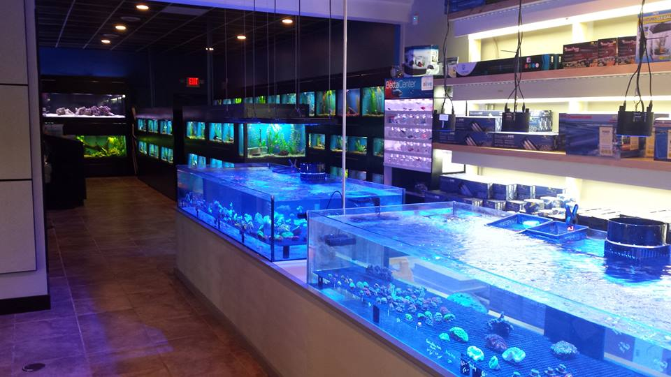 Fish stores near me new york find local fish and for Fish supplies near me