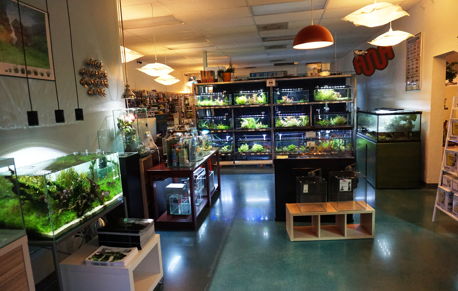 Local fish and aquarium stores in az for Fish stores around me