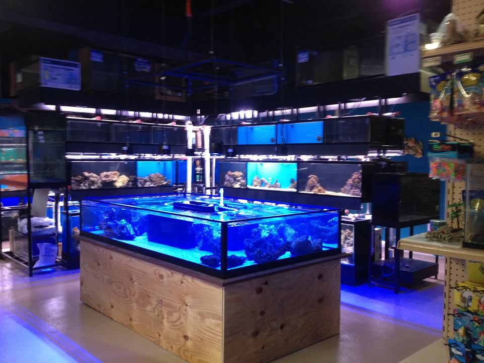 Local fish and aquarium stores in for Fish spa near me