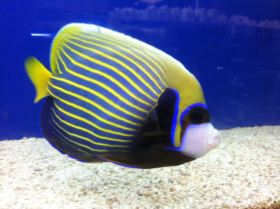 Local fish and aquarium stores in in for Pet store near me fish
