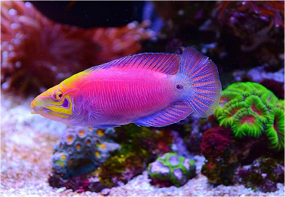 Local fish and aquarium stores in md for Fish stores around me