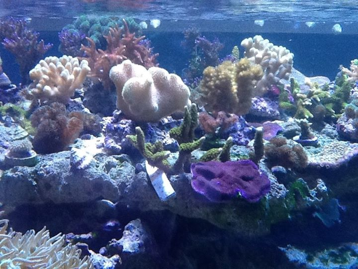 Local Fish and Aquarium Stores in IL FishStoresNearMe.com