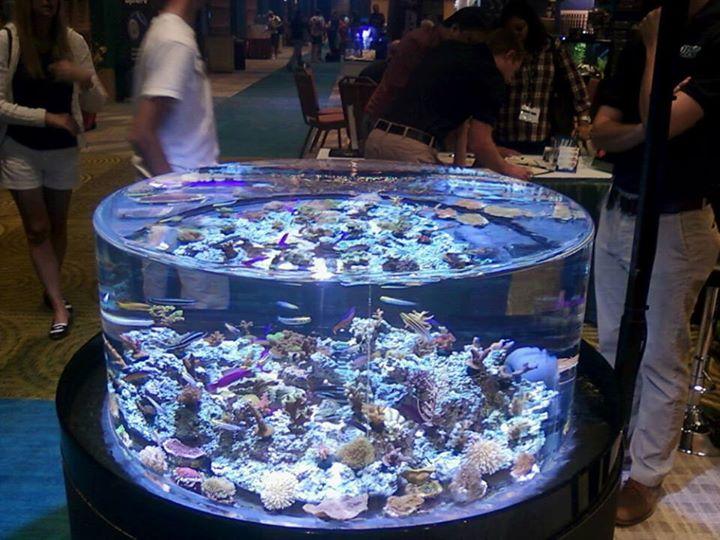 Boardroom Aquariums Llc Fort Myers Fl