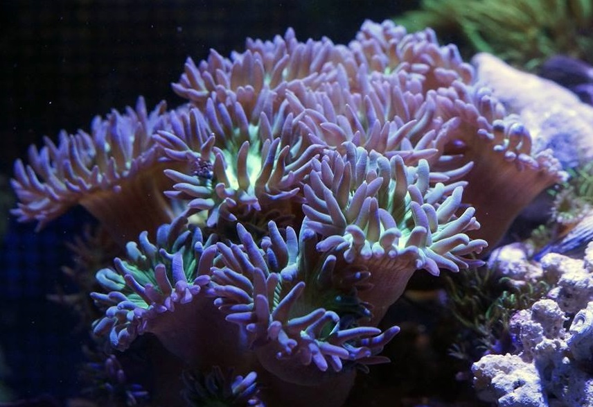 Elite reef arvada co for Saltwater fish stores near me