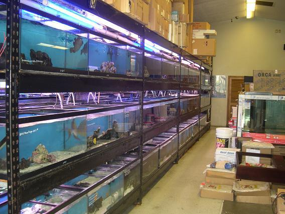 Aquatic technology columbia station oh for Fish shops near me