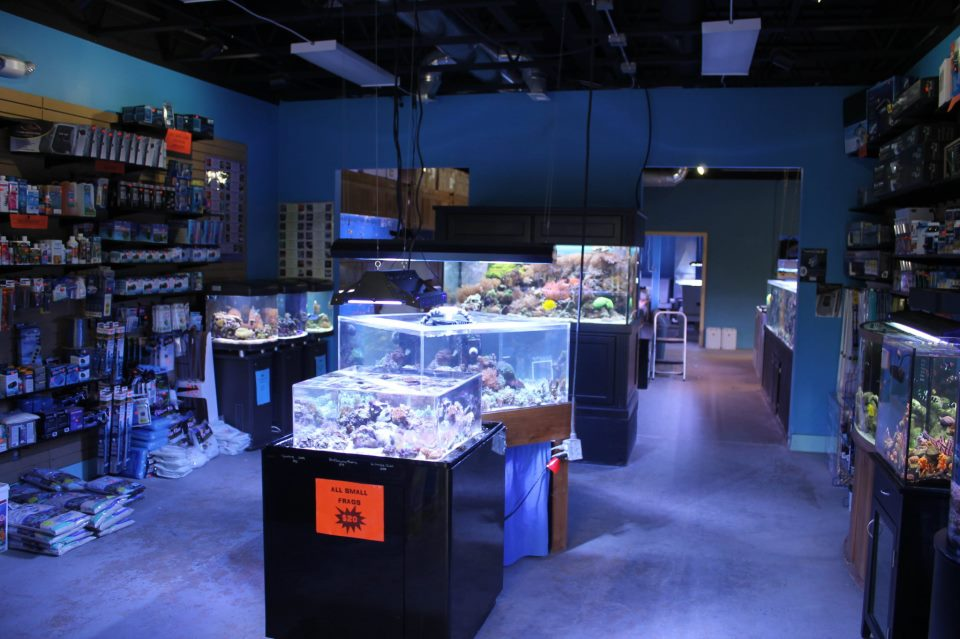 Local saltwater fish stores related keywords suggestions for Fish stores around me