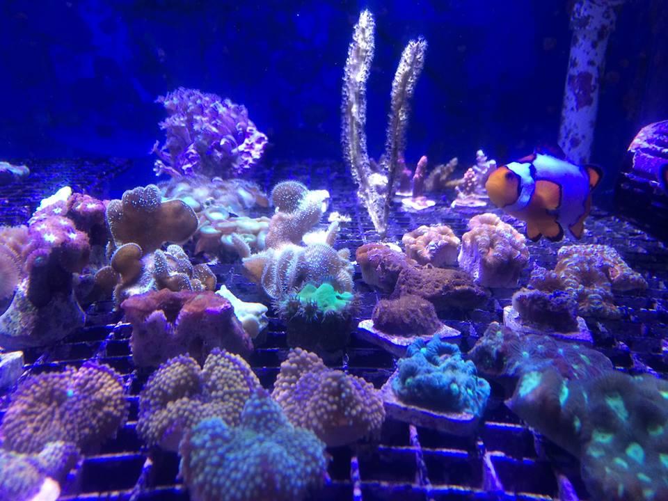 Local fish and aquarium stores in ca for Fish aquarium near me