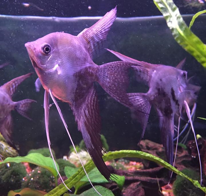 Rick 39 s fish and pet supply frederick md for Pet stores with fish near me