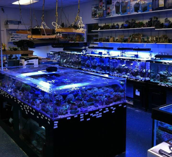 Local Fish And Aquarium Stores In Nc